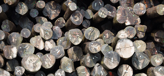 Production Wood